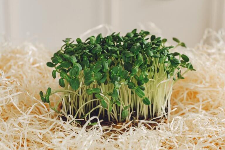 organic food green